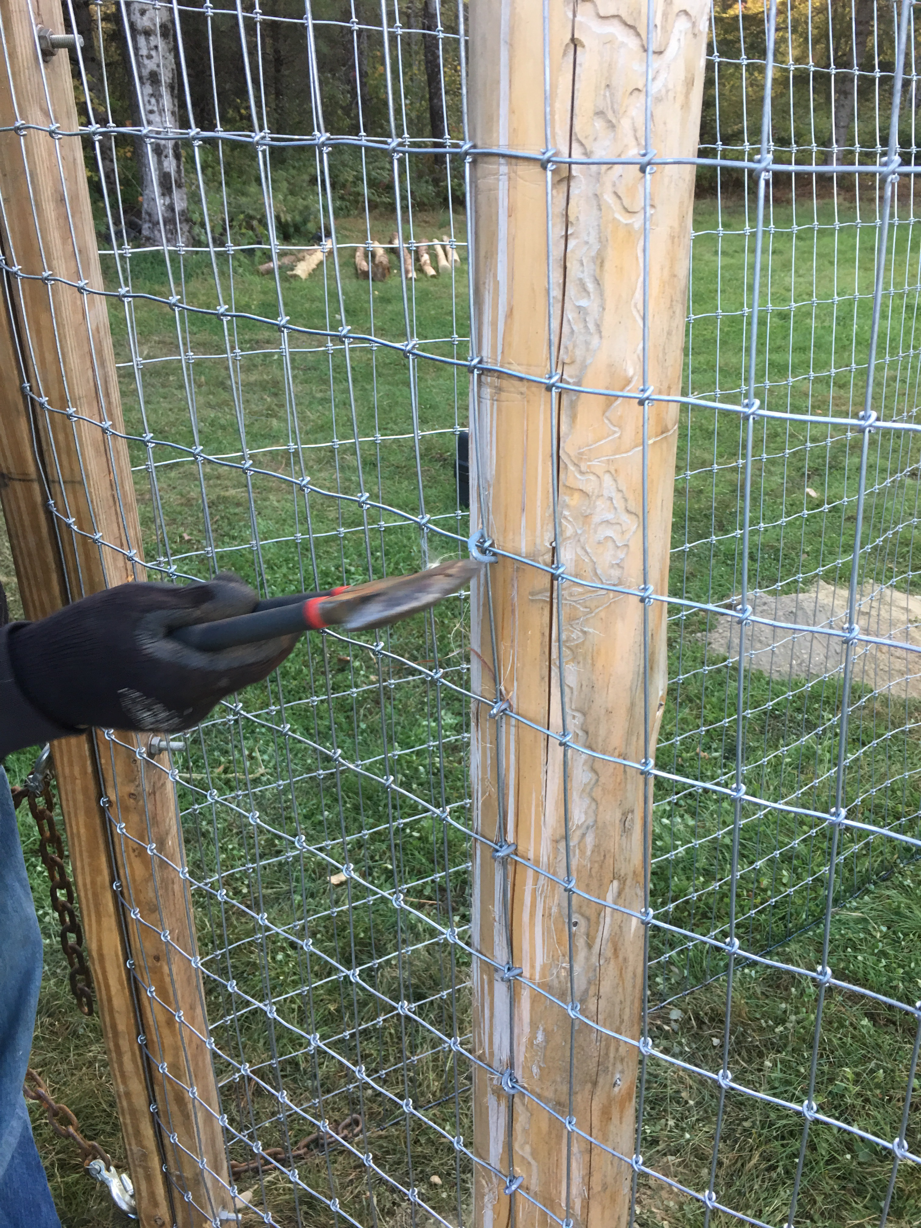 Hand Wire Fence Stapler Barbed Fence Staples - Wire Diagrams