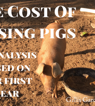 Raising Meat Pigs: Lessons Learned – Gillis Gardens, LLC